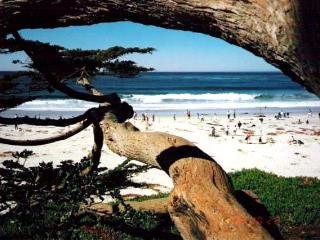 Like a TREEHOUSE + Bring Fido! 10 min walk to town - Carmel vacation rentals
