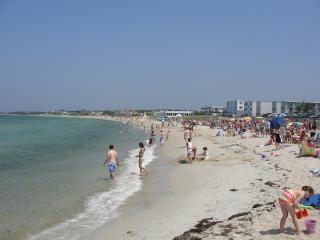 Beach - Quiet 4 Bedroom Home in Falmouth - Falmouth - rentals