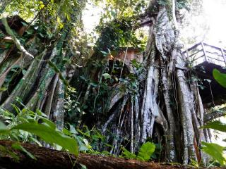 A Jungle-Beach Tree-House In Cahuita - Limon vacation rentals