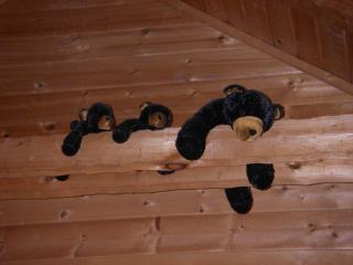 Critters on the rafters to greet children - Alice Curnick