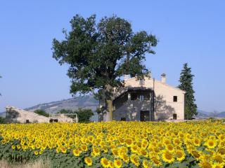 Special B&B in great location for exploring Marche - Treia vacation rentals