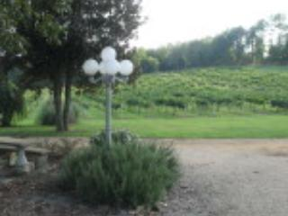 Wills Creek Vineyards - Wills Creek Vineyards at the Windmill - Alabama Mountains - rentals
