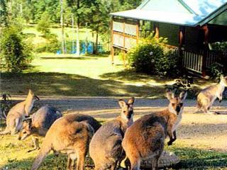 MALENY COUNTRY COTTAGES - Maleny vacation rentals