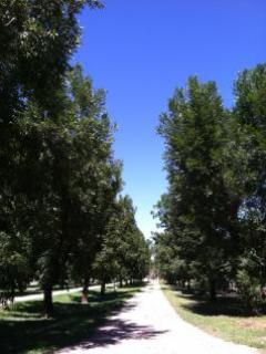 Road into Summer Place Pecan Farm - Precious Cottage on Summer Place Pecan Farm - Camp Verde - rentals