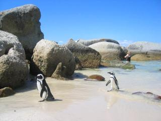 PENGUINDEN accommodation & apartments - Simon's Town vacation rentals