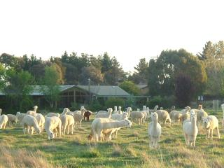 Self Contained Suites on a Alpaca farm - Armidale vacation rentals