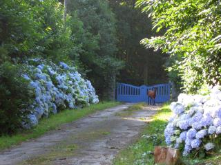 Traditional cottage, 3 bedrooms, near the beach - Douarnenez vacation rentals
