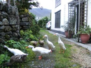 Puddle Duck Cottage, log fire, village nr Keswick - Keswick vacation rentals