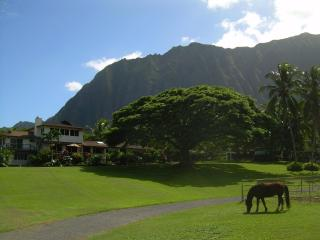 Open Palm Plantation  A Slice of Heaven in Paradise - Waimanalo vacation rentals