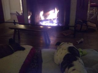 Here are our two dogs relaxing by the cottage fire. - Julie