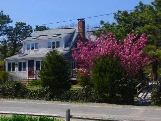 405 Wilson Ave. - Easy walk to beach, with extras - South Wellfleet vacation rentals