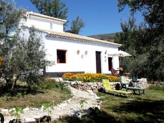 Casa Girasol in olive grove with plunge pool - Priego de Cordoba vacation rentals