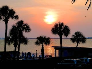 Airport, Clearwater, Downtown & Busch Gardens - Tampa vacation rentals