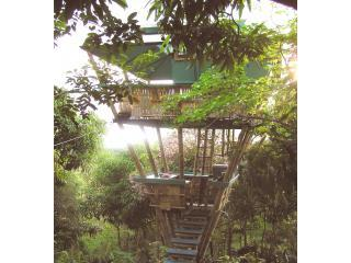 Sunset Hooch - Tropical Treehouse - Rincon - rentals