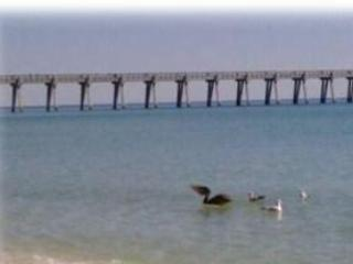 Pelicans playing - Peace on the Beach-Gulf front condo-Navarre Beach - Navarre - rentals