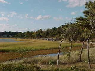 Cove front Cottage overlooking Harbor - Wellfleet vacation rentals