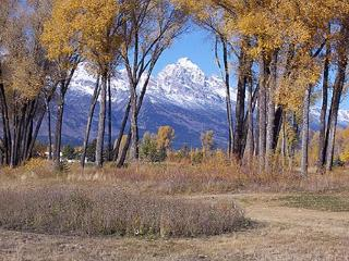 Western Star Cabin - Jackson Hole at it's Best! - Jackson vacation rentals