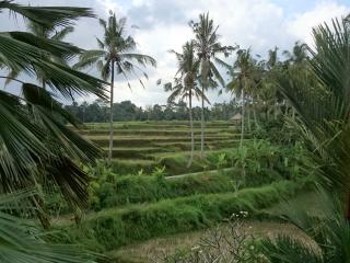 Ground Level Terrace, Great Rice Field View, Quiet - Petulu vacation rentals