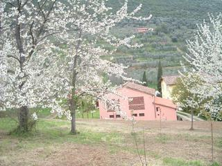 Country House near to Lucca Town Center - Lucca vacation rentals