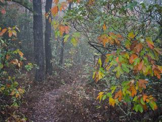 Best Fall Colors week in Virginia-mountainside - McGaheysville vacation rentals