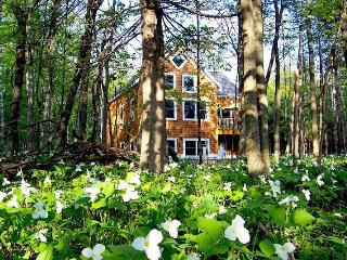 OPEN ALL YEAR*Newer Home w/ Sandy Beach Lake Mich! - Harbor Springs vacation rentals