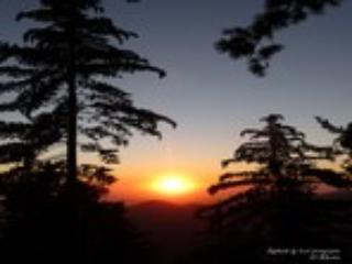 Martha Sanchez (Idyllwild Vacation Cabins!) - Image