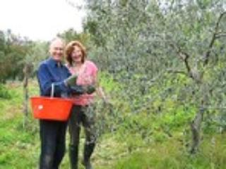 Nigel & Deborah doing the olive harvest - Nigel Tully