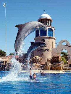 Sea World San Diego - just a few miles from nearly all our vacation rentals - Nancy's Vacation Rentals