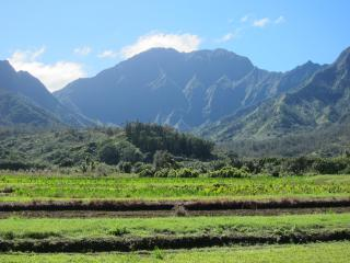 Taro Fields at Hanalei Valley - Garden Island Properties LLC