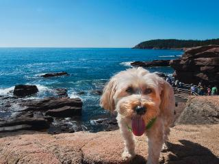 Our dog, Charlie, at Thunder Hole - Donna and Dave