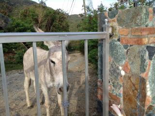 DONKEY AT OUR GATE - SHARON & DAVID