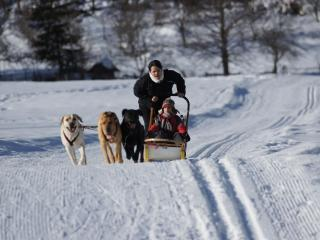One of my favorite sports : dogsledding with our dogs ! - B&B La Canadienne chez Mauzan