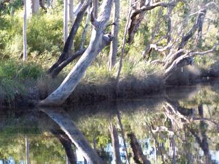River, glassy tree reflections - Shelle Kennedy