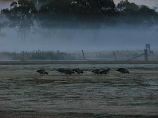 A winter morning at Maric Park. - Maric Park Cottages