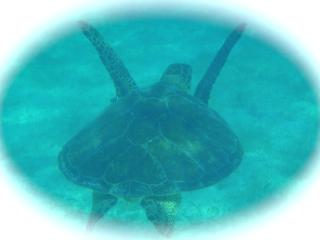 Just a short drive from our casa you can see tortugas! - KAREN CHRISTNER