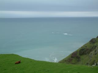 The Sonoma Coast; A truly relaxing, contemplative area for vacations. - Jenner Vacation Rentals