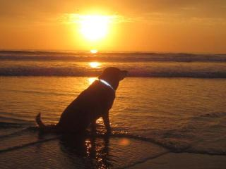 Our son Walter. Del Mar CA. - Dana Behnke & Shawn Schuette