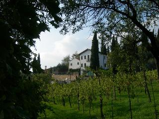 View of the Farmhouse from the vineyard - Lidia Pasqualotto