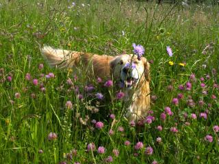 and our dog, Rory - loves the spring meadows - Visitslovenija