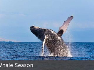 Whale Season Dec - May - Ali'i Resorts, LLC