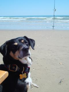 Life is Good at the Beach! - Jessica Perry