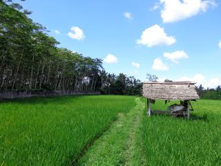 Sawa (rice fields) behind Angel Villa - Angel Villa Bali