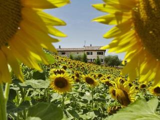 View CA' NICK  Sunflower - Brigitte Liebchen