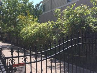 House close to Palo Alto downtown - Greater Boston vacation rentals