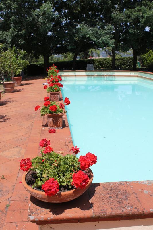 Tuscany Villa Rental in Chianti - Villa Certaldo - Image 1 - San Casciano in Val di Pesa - rentals