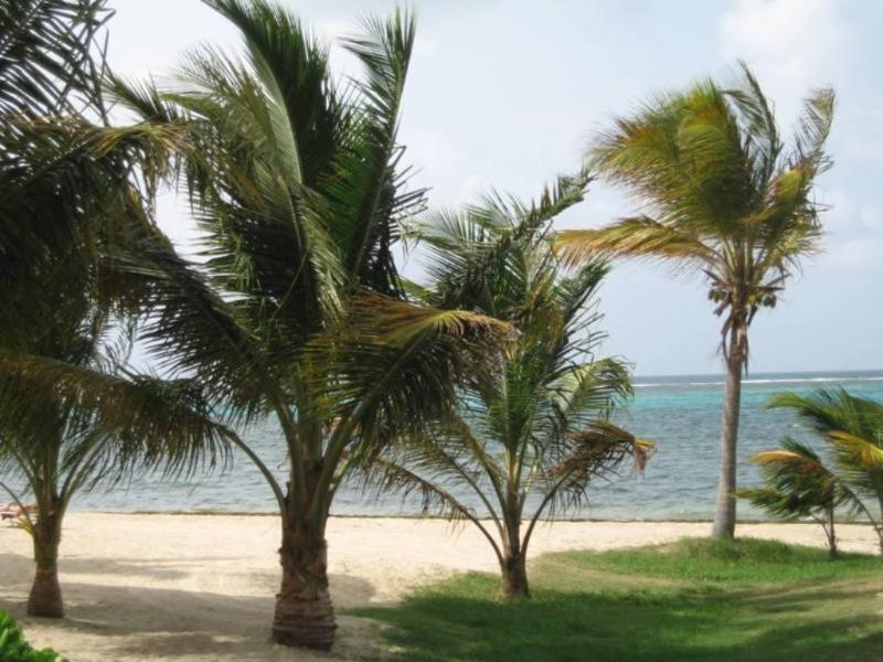 Beautiful beach landscaping - Blue Tranquility at Sugar Beach, St Croix - Christiansted - rentals