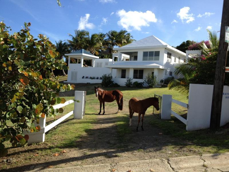 Bravos House - Bravos House Vieques Waterview Villa with Pool - Isla de Vieques - rentals