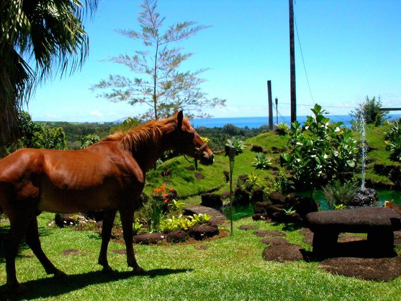 The Horse Grazing In The Front Yard - Hilltop Legacy Vacation Rental - Hilo - rentals