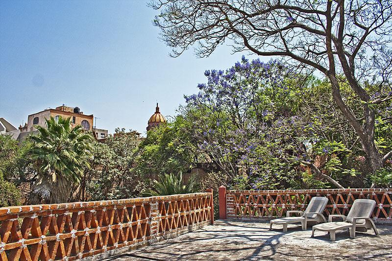 Shared roofdeck with lounge chairs and Jacaranda trees - Centro Unpretentious Efficiency Apartments / Home - San Miguel de Allende - rentals