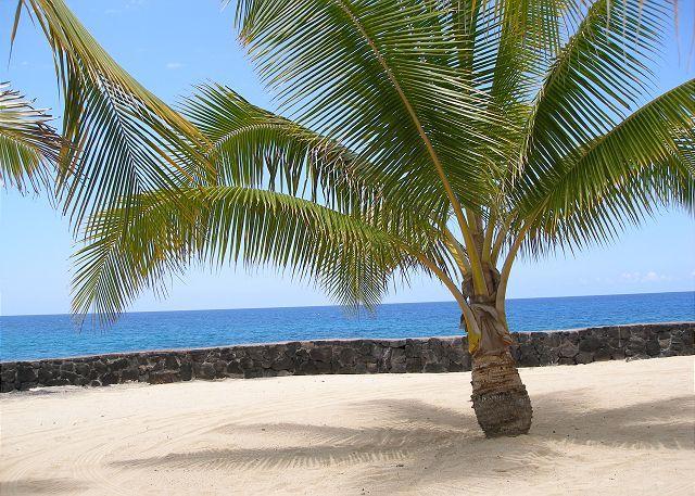 Hale Ano - Casa de Emdeko 103 - AC Included! - Image 1 - Kailua-Kona - rentals